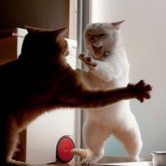 """""""Ignorant people think it is the noise that fighting cats make that is so aggravating, but it ain't so; it's the sickening grammar that they use."""" --Mark Twain"""