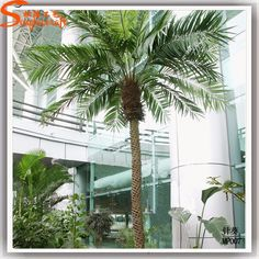 palm tree evergreen decorations