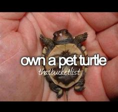 Own a pet turtle