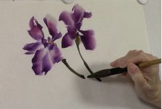 Chinese brush painting video demonstration of an iris in splashing ink style