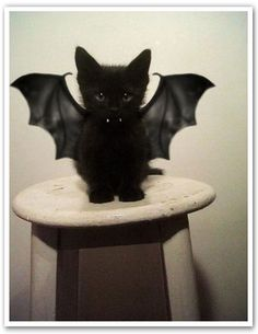 Bat Cat, way too cute.