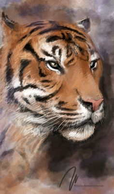 tiger portrait, animal, wiiolis, photoshop