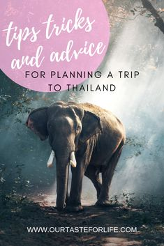 Tips, tricks, and advice for planning a trip to Thailand. Includes the best places to visit, budget, how to stay safe, and more.  #thailand #thailandguide #travelthailand #thailandtips #backpackerguide #thailandplanning