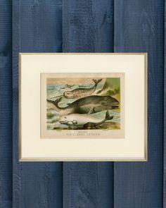 Ocean Theme Decorations, Ocean Themes, Vintage Art Prints, Antique Prints, Whale Nursery, Whale Print, Vintage Dog, Animal Decor, Ocean Beach