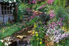 Rustic shed, Butterfly Garden, streamside plantings for Butterfly Conservation.  Lush primula, irises, roses Rosa climbing, water stream waterfall garden, gorgeous flowers, naturalistic, garden tools, attract wildlife to the garden