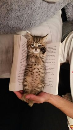 No, you can't read. I need attention, says boss kitten.