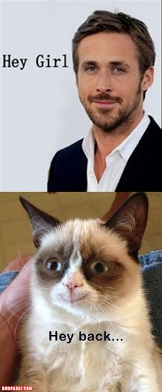 Even Grumpy Cat likes Ryan Gosling. I am so tired of grumpy cat but this made me laugh Funny Shit, Haha Funny, Funny Cute, Hilarious, Funny Stuff, Ryan Gosling, Meme Hey Girl, Girl Memes, Cat Memes