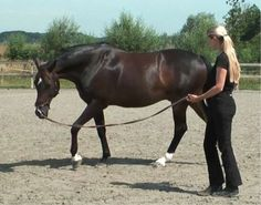 Longeing a horse | Tips & Information | Straightness Training