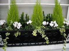 Winter window box - could do this with my little conifer that needs repotting an. - Winter window box – could do this with my little conifer that needs repotting anyway - Winter Planter, Fall Planters, Garden Planters, Terrace Garden, Black Planters, Outdoor Planters, Planter Pots, Window Box Flowers, Flower Boxes