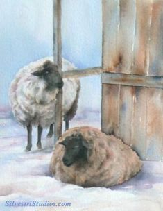 """""""Winter Sheep"""", watercolor sheep painting by animal artist Teresa Silvestri.  Original sold, but fine art prints & cards available."""