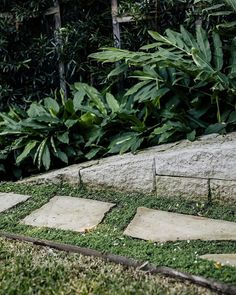 8 Cheap Things to Maximize a Small Bedroom (Read more.) Love the Alpinia nutans behind this stone wall in Freshwater. The stepping stones are surrounded with a groundcover. Outdoor Rooms, Outdoor Decor, Pool Builders, Yard Design, Outdoor Entertaining, Garden Landscaping, Fresh Water, Landscape Design, Lawn