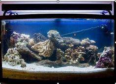 Dirt cheap saltwater aquarium and tanks on pinterest for Aquarium 120l