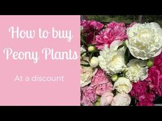 Kelly Lehman: How to buy peony plants at a discount Peony Care Tips, Buy Peonies, Videos, Youtube, Flowers, Plants, Florals, Plant, Flower