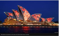 WWI Armistice Centenary: Red poppies are projected on to the sails of the Sydney Opera House. Armistice Day, Best Vpn, Cyber Attack, Remembrance Day, Beaches In The World, World War One, Paris, London, Red Poppies