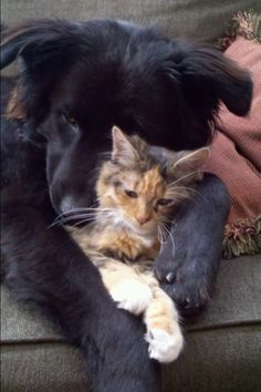 Black dog and Calico cat - relaxed, loving each other, & at peace - what could be better?