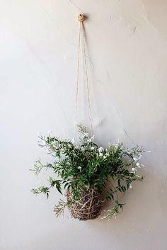 DIY Jasmine Kokedama