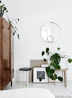 plants and stacked frames