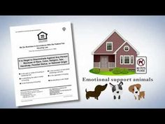 discover more here Get your Emotional Support Animal Letter online! Qualification is easy, fast turnaround, from a licensed mental health professional. same-day service. Animals Kissing, Animal Letters, Health Professional, Support Dog, Emotional Support Animal, Nikko, Best Gifts For Men, Advertising Agency, Asian Art