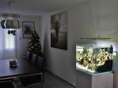 Happiness For My Wife Aquascaper : Greg #aquarium #aquascaping