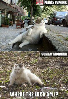 Friday evening vs. Sunday morning