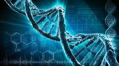 Mundo : O QUE É INFORMAÇÃO GENÉTICA? |