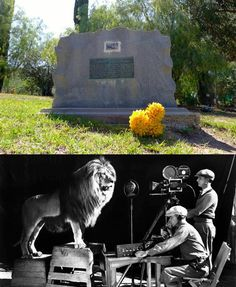 Los Angeles Pet Cemetery Gravesite of the MGM Metro-Goldwyn-Mayer  Lion Tawny (1918-1940) Located at  5068 Old Scandia Ln, Calabasas, Calif.