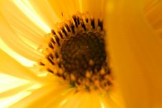 Garden flowers - Extreme closeup - 369