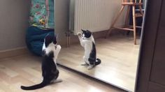 Kitten meeting his reflection.