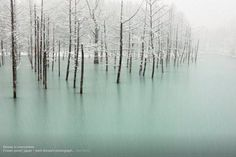 Trees in an icy pond