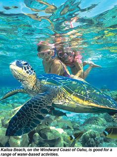 A turtle sanctuary on north shore Oahu near Kailua . Anywhere you snorkle you can see turtles ( state law has restrictions as to how close you can get to them) @neesi26