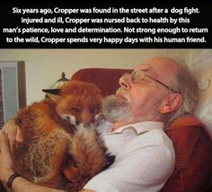 Funny pictures about Happy fox and his human friend. Oh, and cool pics about Happy fox and his human friend. Also, Happy fox and his human friend. Amazing Animals, Animals Beautiful, He's Beautiful, Cute Funny Animals, Funny Cute, Animal Pictures, Funny Pictures, Animals Photos, Amazing Pictures