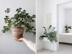 modern white spaces with green plants. / sfgirlbybay