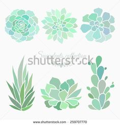 Succulents Stock Photos, Images, & Pictures | Shutterstock