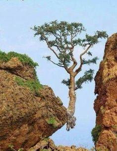 Rebel tree..