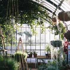 The Greenhouse at Babylonstoren filled with climbers and hanging plants. Greenhouse Restaurant, Picnic Style, Greenhouse Gardening, Garden Structures, Hanging Plants, Growing Plants, Greenery, Places To Go, Photo And Video