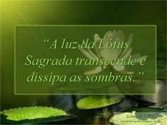 Lótus Sagrado: A luz da lótus sagrada transcende