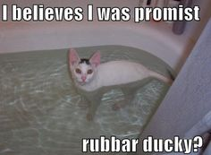 I always have my rubber duck in the bath with me!