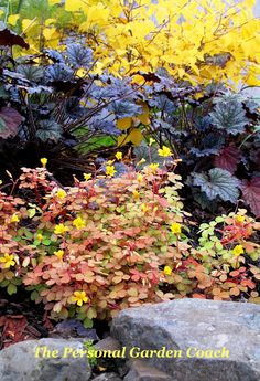 Oxalis with Heuchera 'Velvet Night' and Winterhazel  l designer, Christina Salwitz