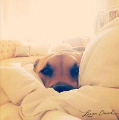 Extraño a mi perro :(