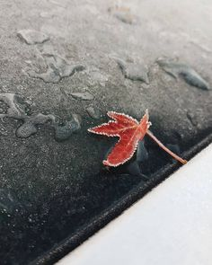 "Eveline on Instagram: ""First frost ❄ [autumn meeting winter - found on the roof of our car as we set of for church]"" Frost, This Is Us, Autumn, Car, Winter, Instagram, Winter Time, Automobile, Fall Season"