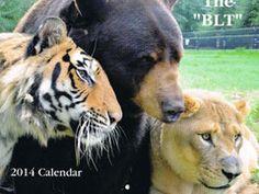 Noah's Ark Animal Sanctuary — 2014 BLT Calendar