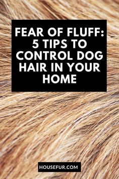 Here are some tips and tricks to keep your fuzzy friend's hair at bay. Below are my top tips to control pet hair in your home. Dog Grooming Styles, Dog Grooming Tips, Dog Ear Cleaner, Dog Nail Clippers, Living With Dogs, Vegetable Garden For Beginners, Dog Boots, Dog Nails, House Plant Care