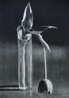 ANDRE KERTESZ - Melancholic Tulip, 1939