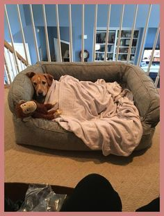 Our ComfortFill-Eco Couch Dog Bed wraps your dog in the soft, supportive comfort she deserves. Diy Dog Bed, Cool Dog Beds, Best Dog Beds, Le Chihuahua, Crate Bed, Frozen Dog, Animal Room, Hamster, Dog Rooms