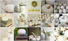 white pumpkins galore...my favorite