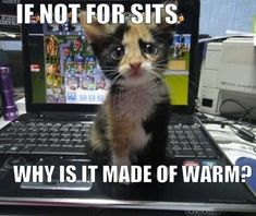 cat jokes | Cat-Humor-Bengal-Cat-Jokes~~element84.jpg