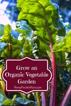 Having an organic vegetable garden means that everything grown in it is free of synthetic insecticides and pesticides. Gardeners have grown organically for hundreds of years and it wasn't unt ...