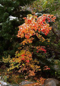 ✯ Fall