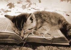 Sleepy kitty. #cats #kittens #books #reading