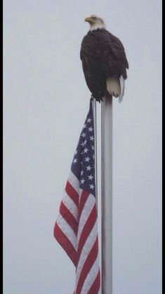 Patriotic bald eagle on Nestucca River flag pole. Email full sizeUdo LindikoffUdo Lindikoff of Portland photographed a patriotic bald eagle from his vacation home in Pacific City on the Nestucca River. I Love America, God Bless America, American Pride, American History, American Flag Eagle, American Photo, American Diner, American Symbols, American Freedom